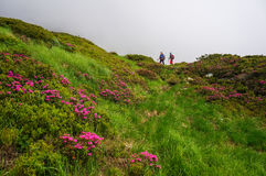 Couple hiking Stock Photo