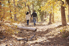 Couple hiking in a forest holding hands, distant back view Stock Images