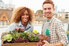 Couple Holding Box Of Plants On Rooftop Garden Stock Photos