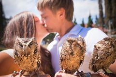 Couple holding on a hand of beautiful owls Royalty Free Stock Image