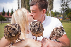 Couple holding on a hand of beautiful owls Royalty Free Stock Images
