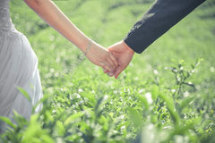 Couple holding hands Stock Image