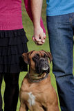 Couple Holding Hands with their Dog Stock Photography