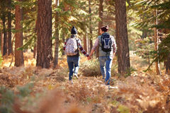 Couple holding hands walking in a forest, back view, USA Royalty Free Stock Image