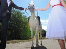 Couple Holding Horse Stock Image