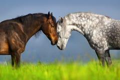 Couple of horse portrait royalty free stock photos