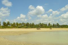 Couple on horseback on the beach with coconut trees. stock photo