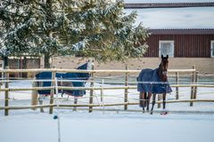 Couple of horses with clothes in winter. Europe royalty free stock photo