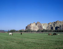 Couple of horses eating near Smith Rocks, Oregon Royalty Free Stock Image
