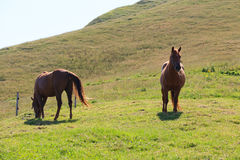 Couple of horses Stock Photos