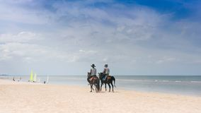 Couple of Horses for rental services on the sand beach. royalty free stock images