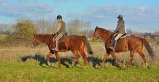 Couple of horses with their drivers Royalty Free Stock Image