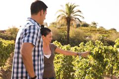 Couple inspecting the vines in a vineyard Royalty Free Stock Photography