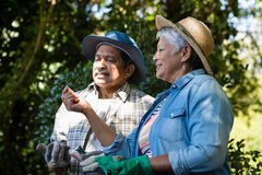 Couple interacting with each other while gardening in the garden. On a sunny day Royalty Free Stock Image