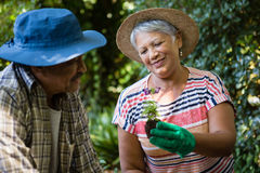 Couple interacting with each other while gardening in the garden. On a sunny day Stock Photos