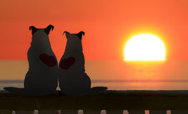 Couple of Jack russell watch the sunset Stock Photos