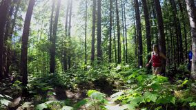 Couple jogging in the forest 4k. Couple jogging in the forest on a sunny day 4k stock video