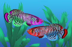 Couple killing fish. In fresh water with green plant Stock Image