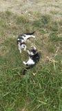 Couple kitties Royalty Free Stock Photo
