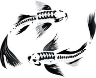 Couple of koi carp Stock Photo