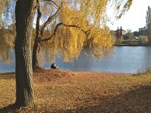 Couple at a lake. Couple sitting on a lake in the bright autumn sun with a tree in the foreground Stock Photography