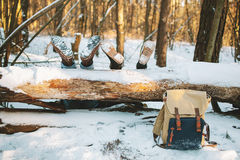 Couple laying on the ground in winter forest with legs on the tr Royalty Free Stock Images