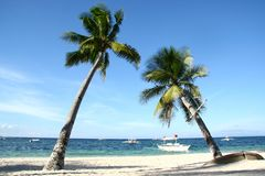 couple leaning coconut tree of Panglao island on bright sunny blue sky day with white beach stock images