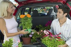 Couple Loading Plants Into Minivan Royalty Free Stock Photo