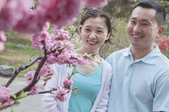 Couple looking at cherry blossoms. Stock Photos