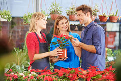 Couple looking for consultation in nursery shop. Couple with poinsettia looking for consultation in a nursery shop stock image