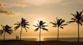 Couple looking at Sunset. Sunset framed by palm trees with people looking to sea stock images