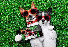 Couple in love. Couple of dogs in love very close together lying on grass taking a selfie Stock Image