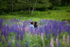 Couple in Love Embracing in Lupine Flowers Stock Photography