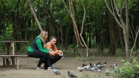 Couple Feeding Pigeons stock video