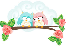 Couple in love owls on branch Stock Images