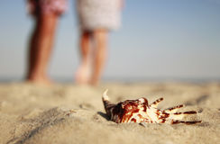 Couple in love with seashells on the shore of the sea Royalty Free Stock Photos