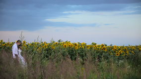 Couple in love surrounded by sunflowers. HD stock video footage