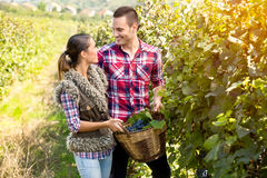 Couple in love together harvested grapes Royalty Free Stock Images