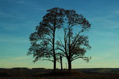 A couple of love trees. stock photos