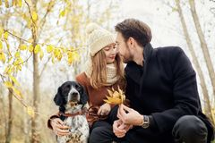 Couple in love on a warm autumn day walks in the Park with a cheerful dog Spaniel. Love and tenderness between a man and a woman stock photography