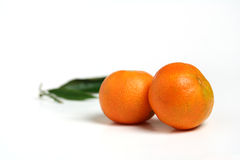 Couple of mandarins Royalty Free Stock Photos
