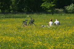 Couple in a meadow Stock Image
