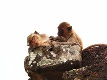 A couple of monkey Stock Photo