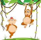 Couple monkey. Of illustration Stock Photos