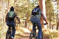 Couple mountain biking through forest, back view Stock Image
