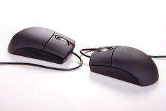 Couple Mouses. Creative lovers couple Black computer mouses on white background royalty free stock photo