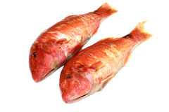 A couple of Mullet. A photo of mullet fish royalty free stock images