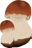 Couple of mushrooms Royalty Free Stock Photography