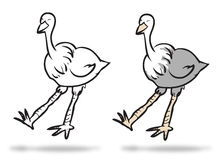 Couple of ostrich Stock Photos