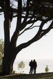 Couple Overlooking Ocean. Couple Standing Under Tree With Backs To Camera Overlooking Ocean Stock Images
